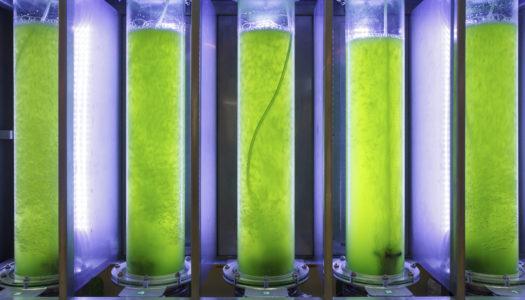 Bringing the World's Fuel Supply Full Circle with Algae Biodiesel