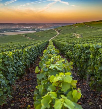 wine and technology, venture magazine