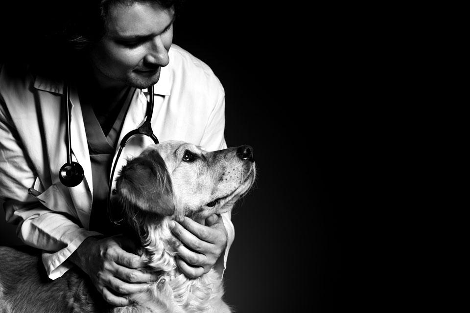 national veterinary care, venture magazine