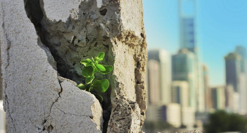 green concrete, the venture magazine