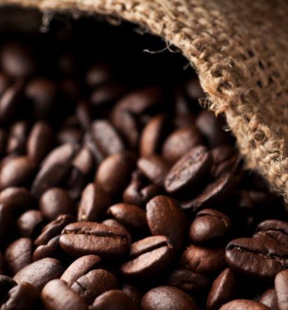 coffee cash crop in australia, the venture magazine