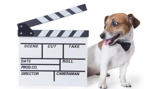 Movie Star Dog Cloned in China