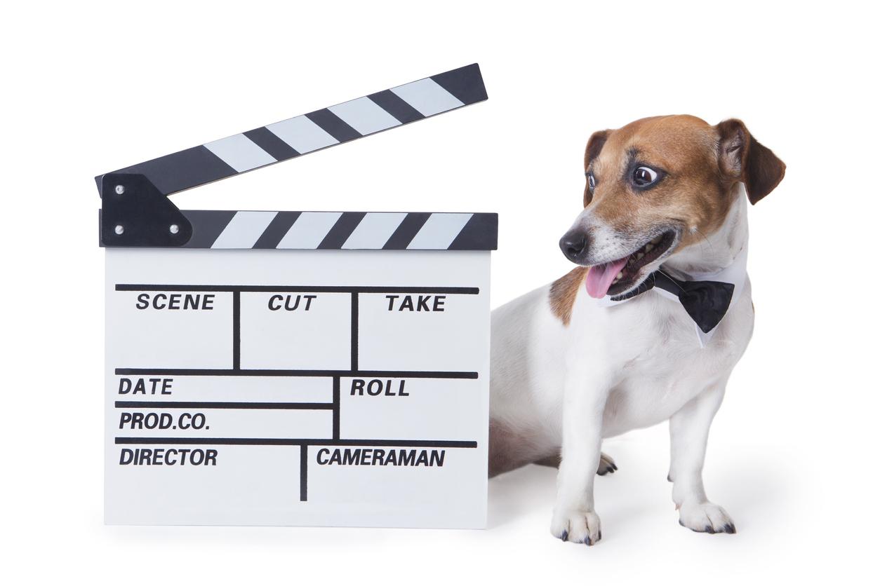 movie star dog cloned in china, the venture magazine