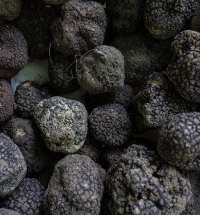 australian black truffles, the venture magazine