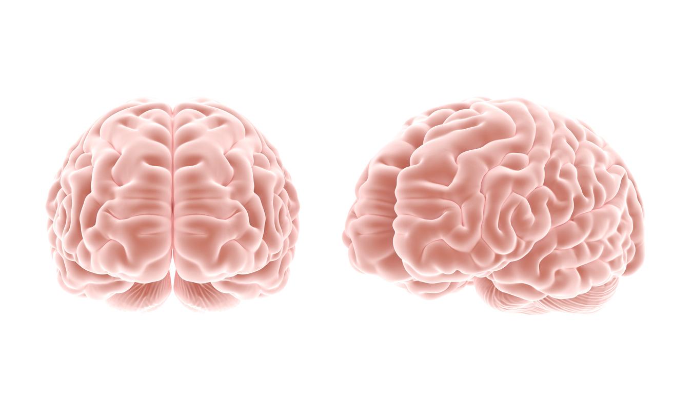 brain on ai, the venture magazine
