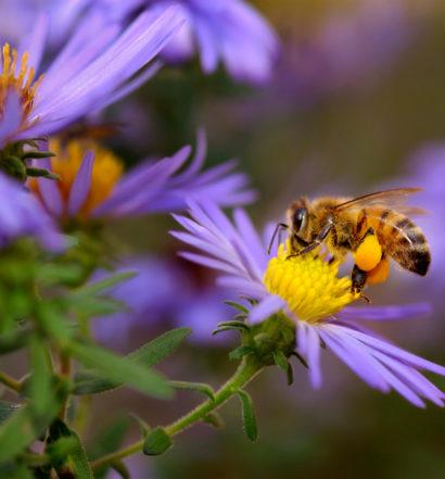 native bees, the venture magazine