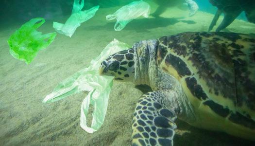 Victoria eyes plastic bag ban