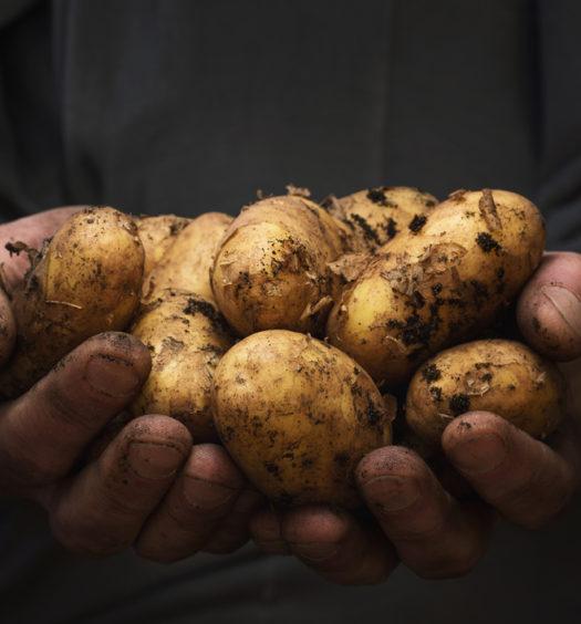 ugly produce, the venture magazine