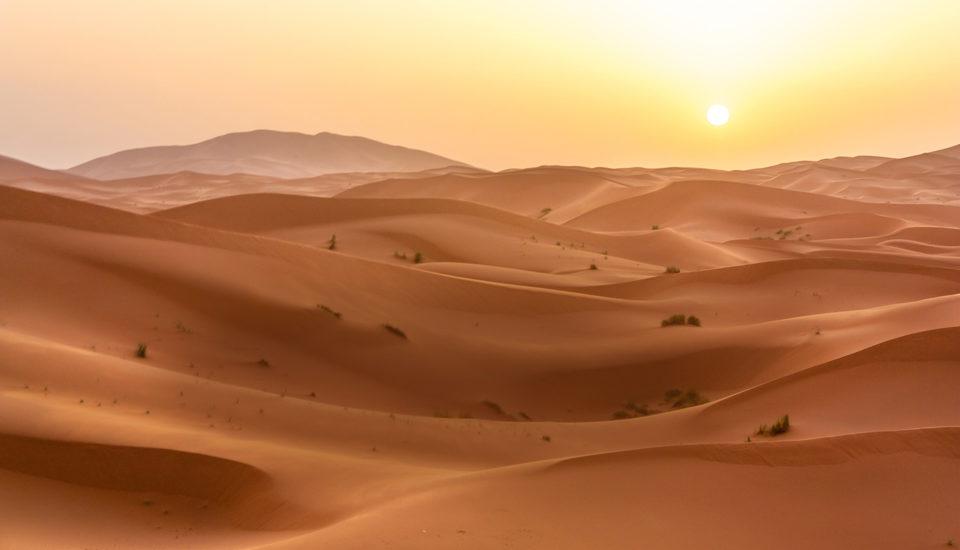 desert greening, the venture magazine