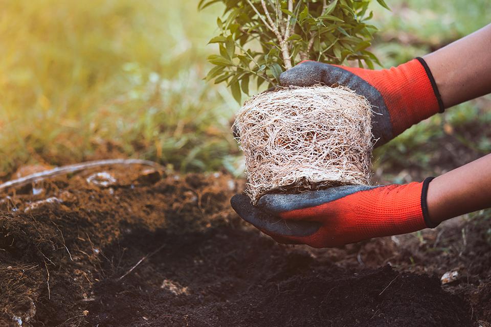 trillion trees, the venture magazine